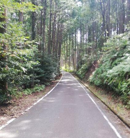 熊野古道3_s.jpg