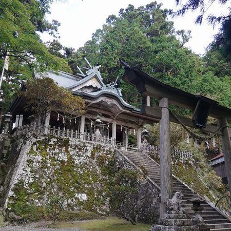 玉置神社と杉_s.jpg