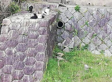 cats_s.jpg