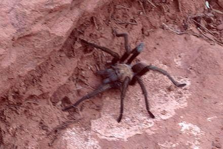 spiderInSedona.jpg
