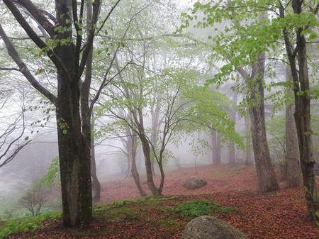 woods_s.jpg